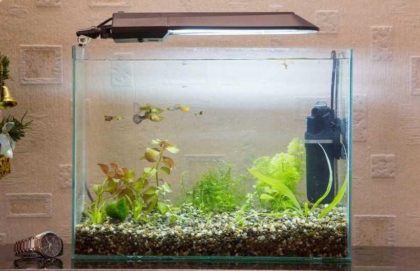 Аквариум своими руками — 135 фото и пошаговое видео описание изготовления аквариума
